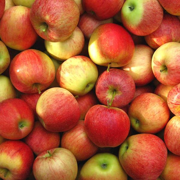 Viele rot-gelbe Äpfel.